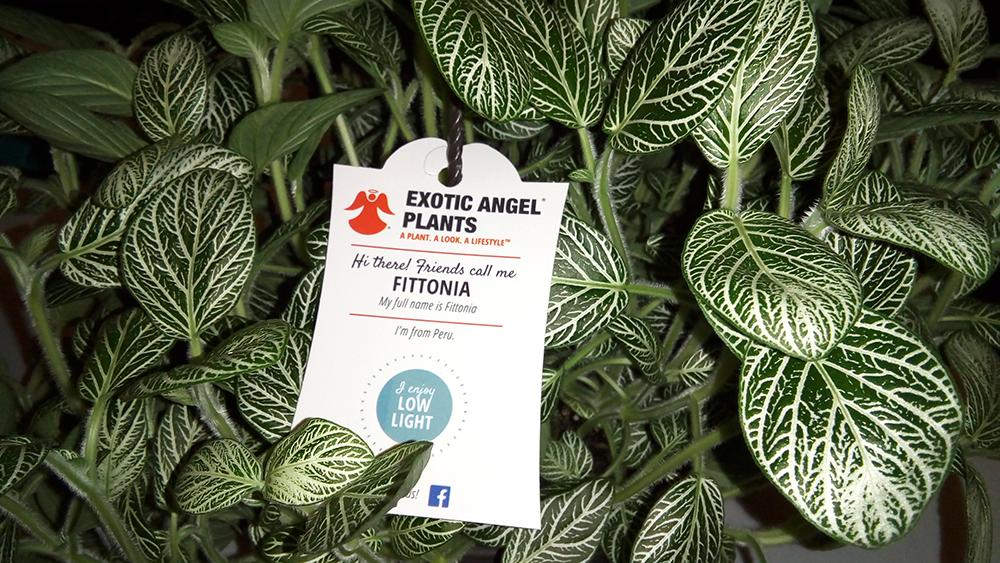 Exotic Angel Pet Friendly House Plants
